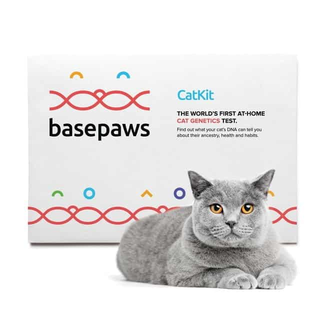 World's first cat DNA kit